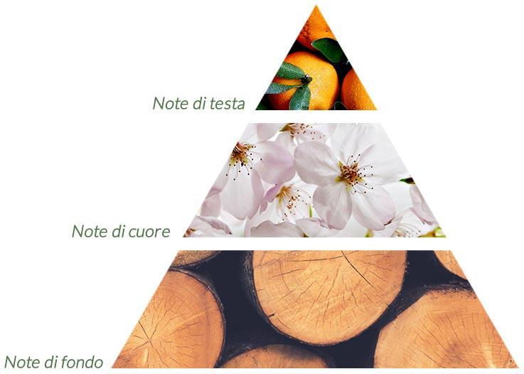 piramide olfattiva profumi